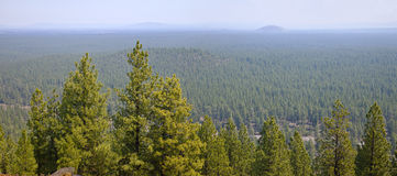 Landscape of a dense forest in central Oregon Royalty Free Stock Photography