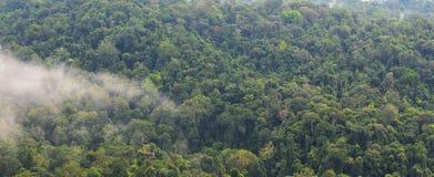 Landscape of dense tropical rainforest at Khao Yai national park Stock Images