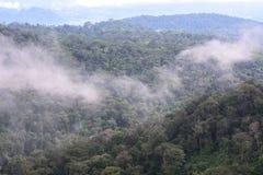 Landscape of dense tropical rainforest at Khao Yai national park Royalty Free Stock Photography