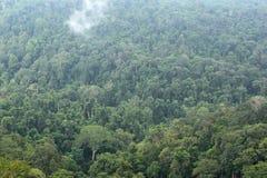 Landscape of dense tropical rainforest at Khao Yai national park Stock Image