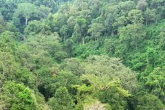 Landscape of dense tropical rainforest at Khao Yai national park Royalty Free Stock Photos