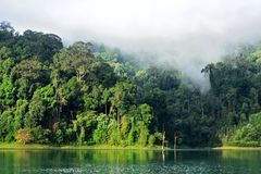 Landscape of dense tropical rainforest at Rajjaprabha Dam or Cheow Lan Dam Guilin of Thailand. Forest landscape of Thailand Stock Photography