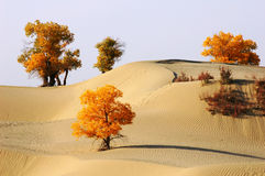 Landscape in the desert Stock Photography