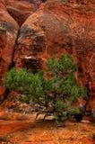 Landscape in Desert Stock Images
