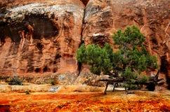 Landscape in Desert Stock Image