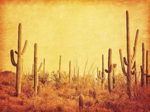 Landscape of the desert with Saguaro cacti. Photo in retro style. Added paper texture. Toned image.  stock photography