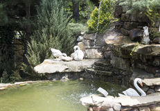 Landscape design.. Decorative stone waterfall pond near swimming pool in the park zone. landscape design. close up. decorative swans and green shrubs royalty free stock photography