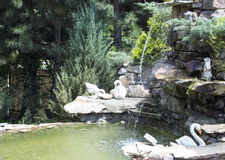 Landscape design. Decorative stone waterfall pond near swimming pool in the park zone. landscape design. close up.decorative swans and green shrubs Stock Images