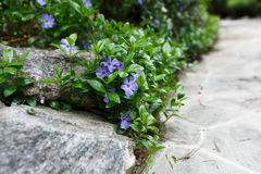 Landscape design detail, summer garden path closeup. Landscape design, summer garden. Stone path and blooming flowers closeup, abstract natural green background stock photo