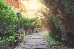 Landscape design, evergreen bushes and garden tile path Stock Image
