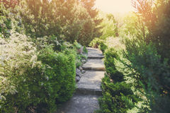 Landscape design, evergreen bushes and path Stock Images