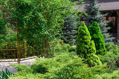Landscape design, evergreen fir trees and shrubs Royalty Free Stock Images