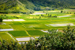 Landscape detail of green taro fields in Hanalei valley, Kauai Royalty Free Stock Photos