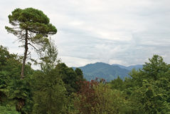 Landscape with different trees before the rain Stock Photo