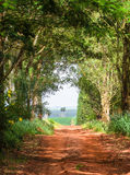 Landscape of dirt road on farm surrounded by trees Stock Photography