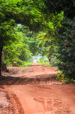 Landscape of dirt road on farm surrounded by trees Royalty Free Stock Photography