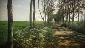 Landscape a dirt road between grassland. Stock Photos