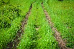 Landscape, dirt road on green grass Stock Images