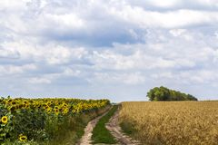 Landscape with dirt road between meadow early in the spring. Royalty Free Stock Photo