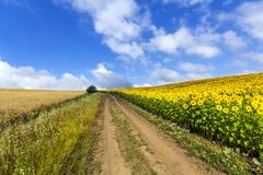 Landscape with dirt road between meadow early in the spring. Royalty Free Stock Images