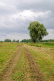 Landscape with dirt road. And tree Stock Image