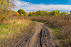 Landscape with dirty earth road on the edge of sunflower field Stock Photos
