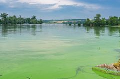 Landscape with Dnipro river covered with cyanobacteria at June cloudy day. Summer landscape with Dnipro river covered with cyanobacteria at June cloudy day near royalty free stock photography