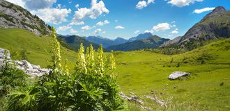 Landscape in Dolomites with a cluster of foxglove on the foregro royalty free stock image
