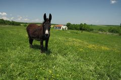 Landscape with a donkey. Stock Photography