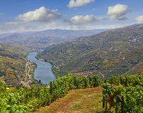 Landscape in the Douro region, Portugal Stock Image