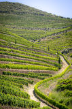 Landscape in Douro Valley. Douro Valley: Vineyards near Duoro river, Portugal Stock Images