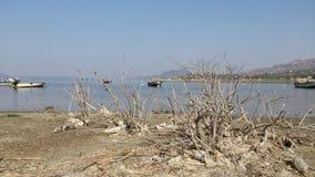 Landscape with dried branches. Horizontal landscape with many boats and gray dried branches on front of seaside in Bafa Golu , Turkey Royalty Free Stock Image
