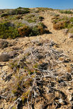 Landscape with dried bush. Desert landscape with dried bush stock photos