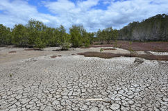 Landscape of dry earth Stock Photography