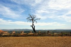 Landscape with dry tree with mountain view. Royalty Free Stock Photography