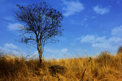 Landscape. A dry tree standing alone Stock Image