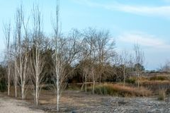 Landscape consequence of the drought. Landscape with dry trees due to the drought of several years stock photo