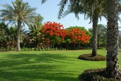 Landscape in Dubai. Beautiful landscaping in dubai road side Royalty Free Stock Photography