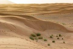Landscape of Dubai Desert. While on Safari royalty free stock images