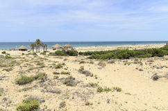 Landscape with Dunes at Arenales del Sol beach Royalty Free Stock Photo