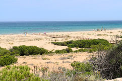 Landscape with Dunes at Arenales del Sol beach Stock Photo