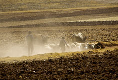 Landscape, dust, drove, Sacred Valley, rural Peru Royalty Free Stock Images