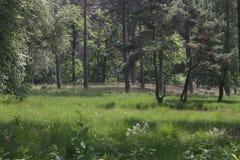 Landscape in Dutch limburg Stock Photos