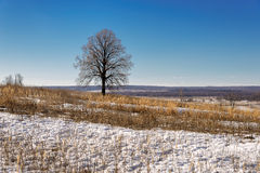 Landscape early spring in a sunny day Royalty Free Stock Images