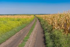 Landscape with an earth road between agricultural field with goldish maize near Dnipro city, Ukraine. September landscape with an earth road between agricultural Royalty Free Stock Photos
