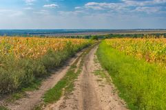 Landscape with an earth road between agricultural field with goldish maize near Dnipro city, Ukraine. Summer landscape with an earth road between agricultural Royalty Free Stock Photography