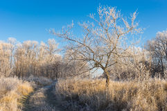 Landscape with earth road through the lands covered with hoar-frost. Fall landscape with earth road through the lands covered with hoar-frost royalty free stock image