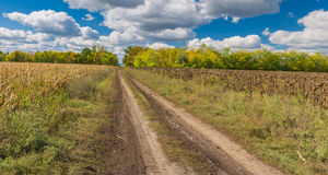 Landscape with earth road between maize and sunflower fields in central Ukraine Stock Image