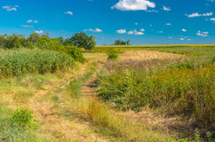Landscape with an earth road in overgrown meadow Stock Photos