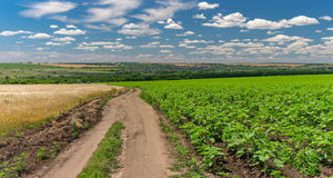 Landscape with an earth road among sunflower and wheat agricultural fields Royalty Free Stock Image